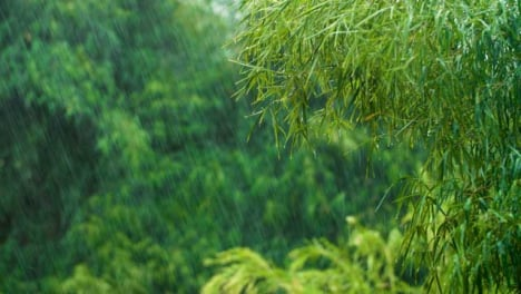 Long-Shot-of-a-Rain-Storm-In-Tropical-Forest-