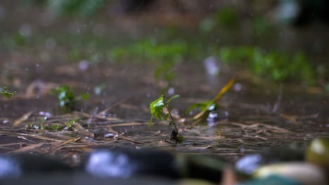 Long-Shot-of-Tiny-Plant-In-Rain-Storm
