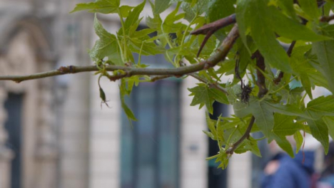 Close-Up-Shot-of-Leaves-Blowing-In-Mild-Stormy-Weather