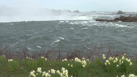 Canada-Niagara-Falls-with-flowers-in-foreground