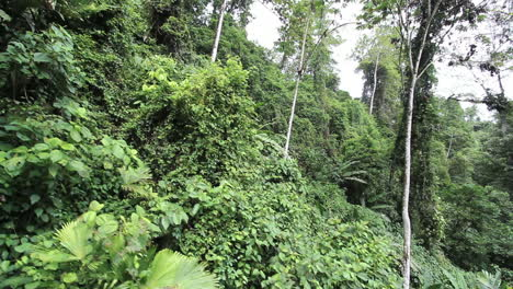 Costa-Rica-moves-past-rainforest-on-slope