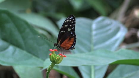 Costa-Rica-rainforest-zooms-on-butterfly-that-flies-off