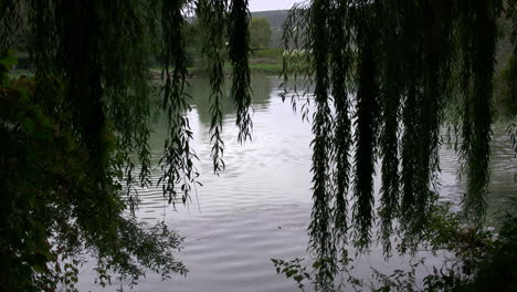 France-Marne-River-with-willows