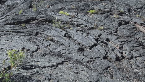 Lava-Beds-National-Monument-plants-in-lava-pan