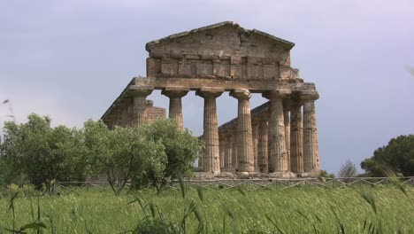 Italy-Paestum-Temple-of-Athena-with-olive-trees