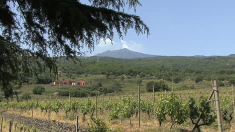 Sicily-Etna-and-vineyard-view