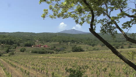 Sicily-Etna-and-vineyard-with-tree-frame