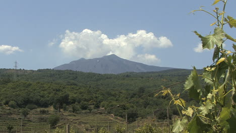 Sicily-Etna-with-grapevine
