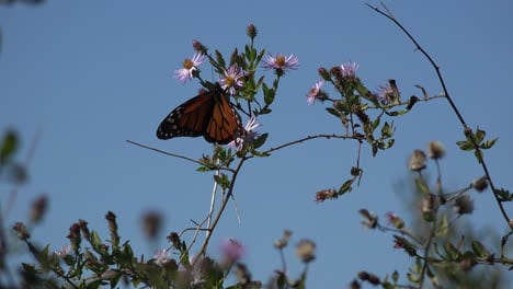 Butterflies-and-flowers-with-blue-sky