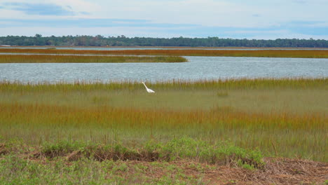 South-Carolina-zoom-out-from-heron