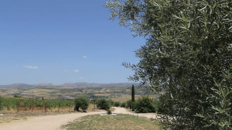 Andalucia-Spain-road-and-olive-tree