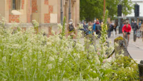 Tracking-Shot-Behind-Plants-with-Busy-English-Street-In-Background