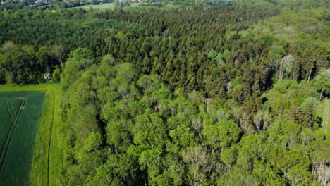 Drone-Shot-Flying-Away-from-Woodland