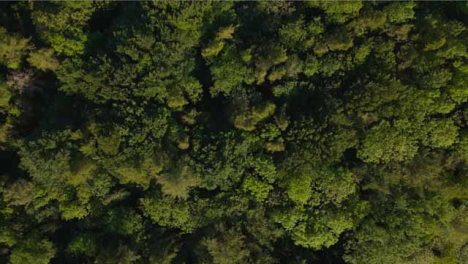 Drone-Shot-Rising-High-Above-Trees