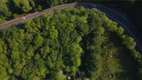 Drone-Shot-Flying-Over-Trees-and-Looking-Down-On-Countryside-Road