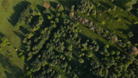 Drone-Shot-Rotating-as-It-Looks-Down-On-Trees