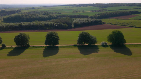 Drone-Shot-Flying-Over-Agricultural-Field-Looking-at-Trees