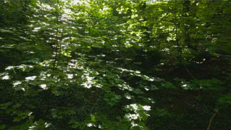 Drone-Shot-Rising-Up-In-Woodland-Area