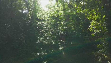 Drone-Shot-Flying-Away-from-Thick-Foliage-In-Woodland-