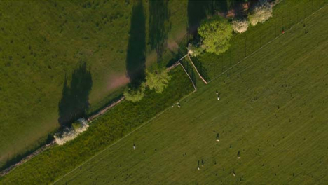 Drone-Shot-Flying-Over-Field-with-Sheep-