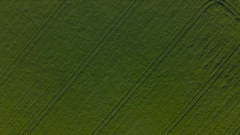 Drone-Shot-Flying-Over-Agricultural-Field-