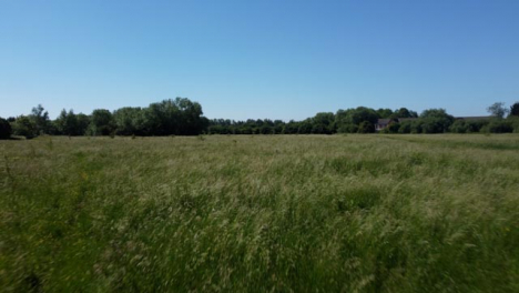 Drone-Shot-Flying-Low-Over-Tall-Grass-Field-