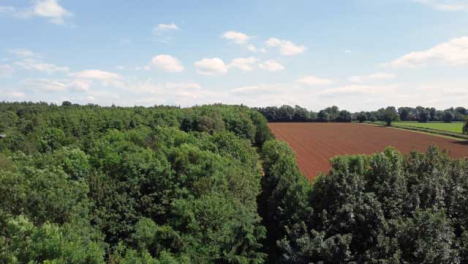 Drone-Shot-Ascending-Above-Trees-to-Reveal-Agricultural-Field-
