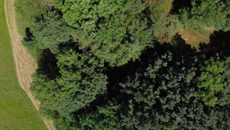 Drone-Shot-Looking-Down-On-Trees-as-It-Ascends-and-Rotates