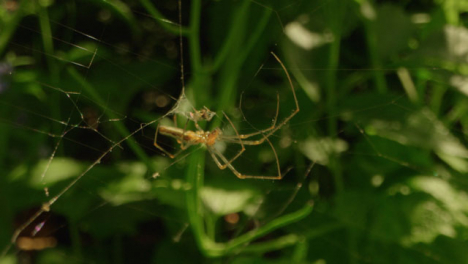 Extreme-Close-Up-Shot-of-Spider-On-Web