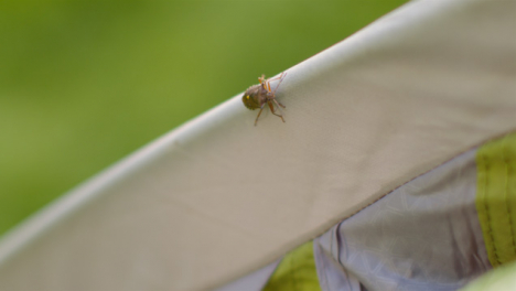 Close-Up-Shot-of-Shield-Bug-On-Tent-