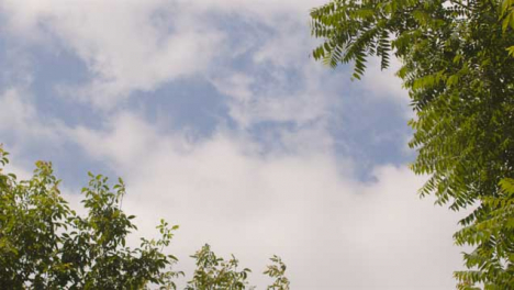 Low-Angle-Shot-Looking-Up-at-Clouds-Above-Trees