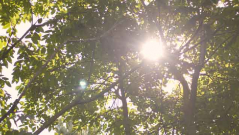 Low-Angle-Shot-Looking-Up-at-Sun-Bursting-Through-Leaves
