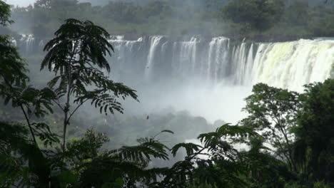 Iguazu-Falls-Argentina-silhouetted-tree