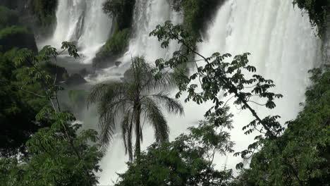 Iguazu-Falls-Argentina-with-palm-tree