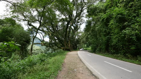 Argentina-car-on-forest-road