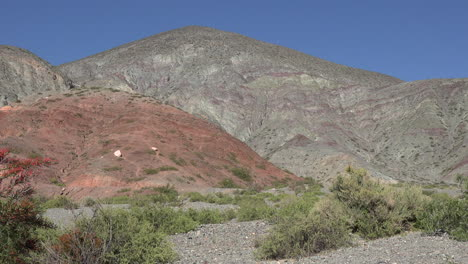 Argentina-red-hill-and-shrubs-pan