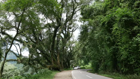 Argentina-road-in-subtropical-woodland-zoom-in