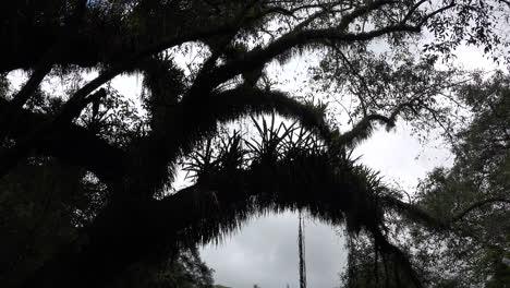Rama-De-Un-árbol-De-Argentina-En-Los-Subtrópicos