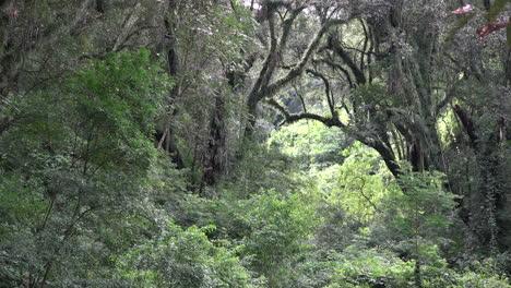 Argentina-view-through-subtropical-forest