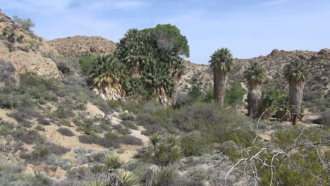 Joshua-Tree-National-Park-California-Cottonwood-Springs