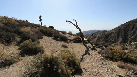 Joshua-Tree-National-Park-California-Keyes-View-with-dead-tree