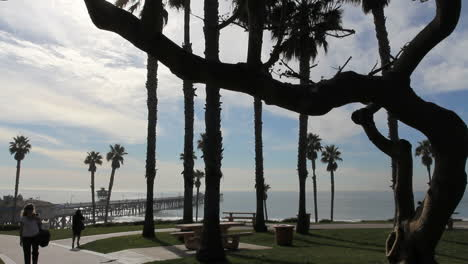 California-San-Clemente-twisted-tree