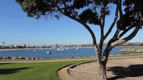 California-San-Diego-tree-and-boats