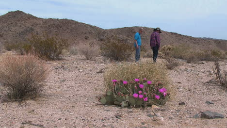 California-beavertail-prickly-pear-and-couple