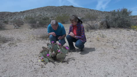 California-couple-inspect-a-blooming-Beavertail-cactus