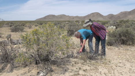 California-desert-couple-looking-at-a-plant