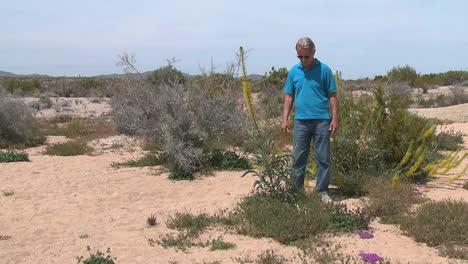 California-desert-man-looking-at-plant