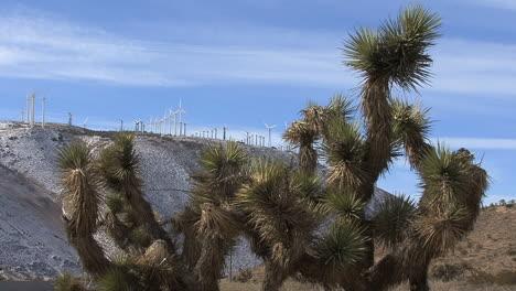 California-joshua-tree-and-windmills