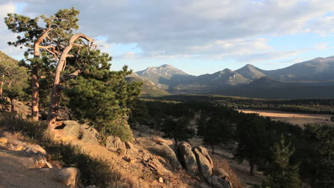 Colorado-Rocky-Mountain-Nationalpark-Mit-Pinien