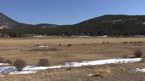 Parque-Nacional-De-Las-Montañas-Rocosas-De-Colorado-Con-Alces-En-La-Pradera